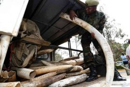 Kenya wins world support for global ban on ivory trade