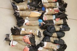 KRA seizes over 200 pieces of birds and butterfly trophies illegally shipped in from Tanzania for export to UK, Hungary.