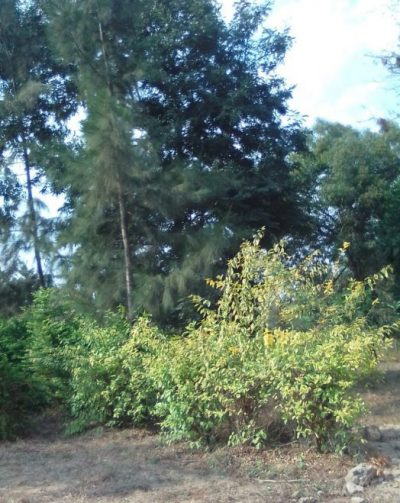 Family selling 24 Acres near Kanyariri on Embu-Siakago main road