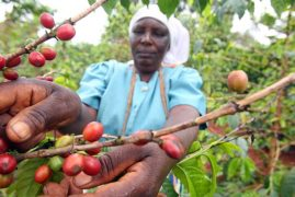 Kenya targets specialty coffee symposium to double US sales
