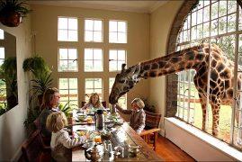 Giraffe Manor $1,000 a night – Nairobi, Kenya