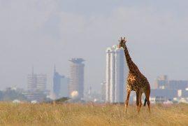 Nairobi National Park May Still Be Hived Off For Railway Land