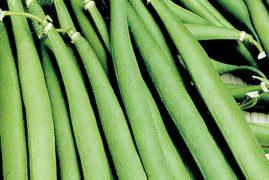 EU lifts ban on Kenya's beans