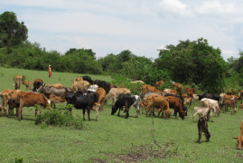 Poor Kenyan herders fined $494,000 for grazing in Tanzania