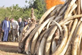 Kenya to burn all ivory stockpiles this year, says Uhuru