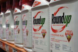 HomeNews Kenyans still using cancer-causing weed-killers