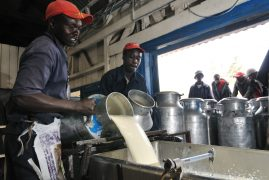 Video:70% Milk Delivered In Nairobi maybe  Laced with Hydrogen Peroxide.