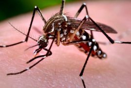 119 infected after Mombasa dengue fever outbreak