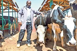 Matatu man turns top farmer with 74 cows