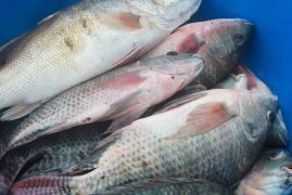 Fish Imports from China to continue as local production improves