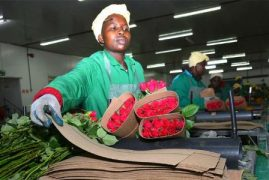 Kenya bets on flower hub in China to grow exports