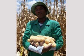 Kenyan researchers step up trials for genetically altered crops in bid to fight hunger