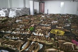 Mombasa tycoon arrested over Sh500 million ivory haul in Singapore