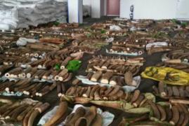 Singapore nets biggest ivory seizure from Kenya worth Sh580m