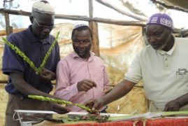 The isolated Jews of rural Kenya: Starting from aleph with a lulav and etrog