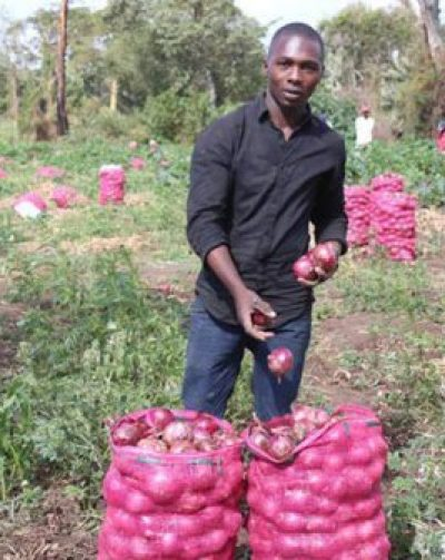 I wanted to be a vet, but found hotter deal in growing onions