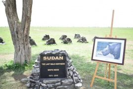 Kenya commemorates last male northern white rhino