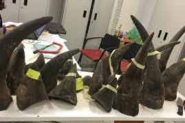 Vietnam seizes 100 kgs of rhino horn from Kenya
